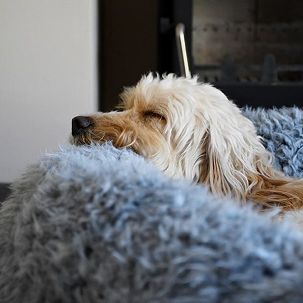 How anxiety reducing dog beds really do work