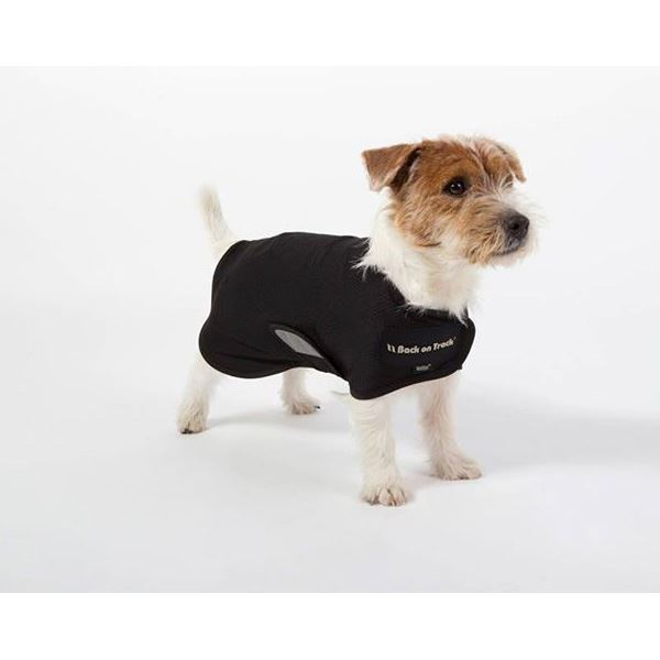 Back On Track Hugo Mesh Dog Coat